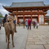 Nara, destination incontournable au Japon?